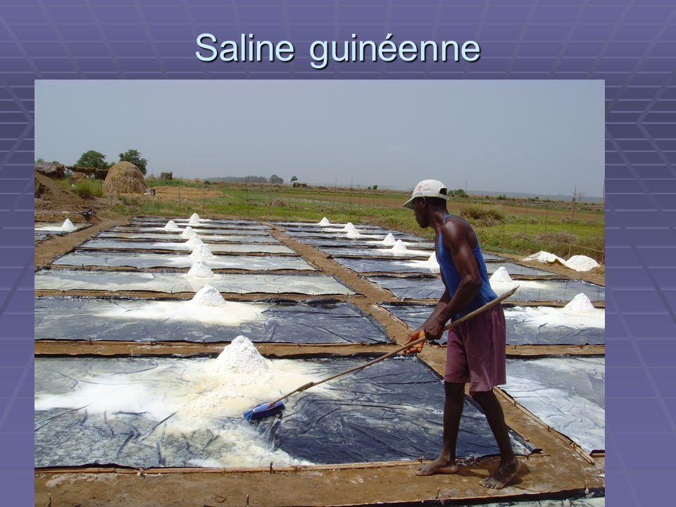 ADAM Saline guinéenne