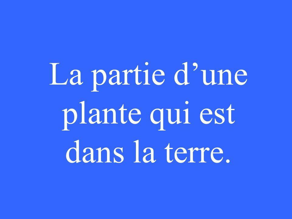 La partie d'une plante qui est dans la terre.