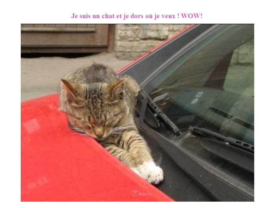 Je suis un chat et je dors où je veux ! WOW! Diaporama PPS réalisé pour http://www.diaporamas-a-la-con.com http://www.diaporamas-a-la-con.com