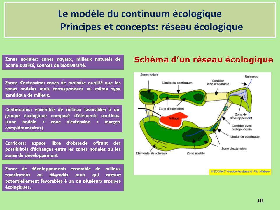 Le modèle du continuum écologique Principes et concepts: réseau écologique 10 Schéma d'un réseau écologique Zones de développement: ensemble de milieu