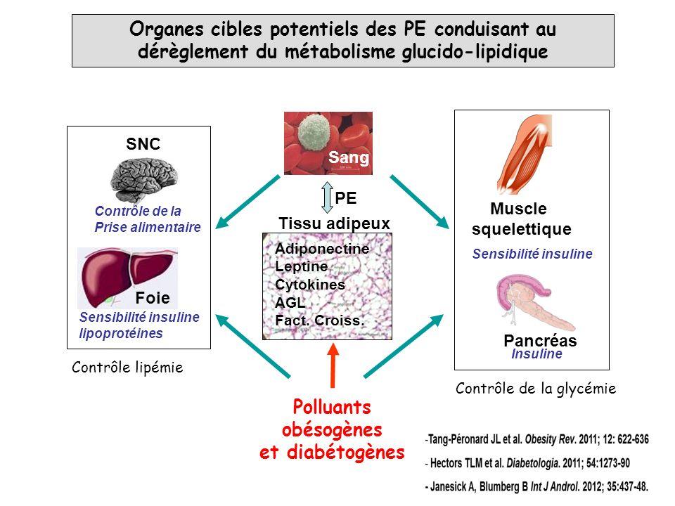 Organes cibles potentiels des PE conduisant au dérèglement du métabolisme glucido-lipidique SNC Foie Pancréas Tissu adipeux Muscle squelettique Adipon