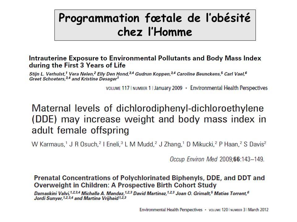 Programmation fœtale de l'obésité chez l'Homme