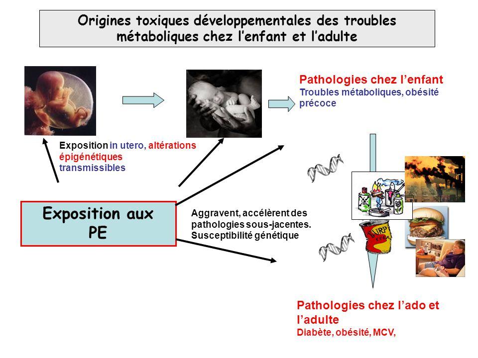 Origines toxiques développementales des troubles métaboliques chez l'enfant et l'adulte Exposition aux PE Exposition in utero, altérations épigénétiqu