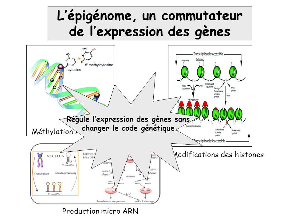 Méthylation ADN Modifications des histones Production micro ARN L'épigénome, un commutateur de l'expression des gènes Régule l'expression des gènes sa