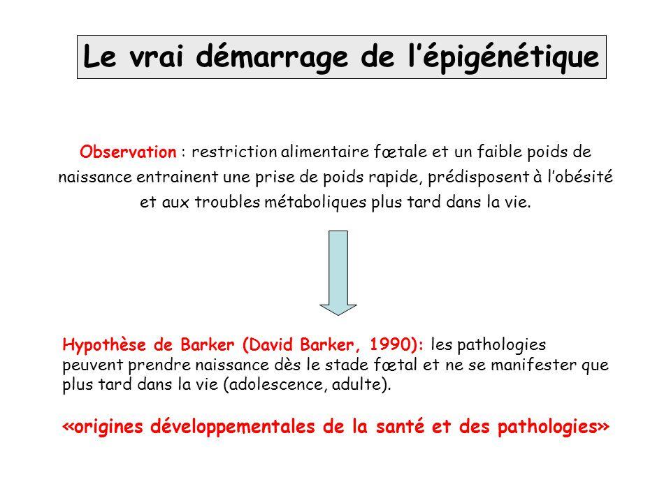 Le vrai démarrage de l'épigénétique Hypothèse de Barker (David Barker, 1990): les pathologies peuvent prendre naissance dès le stade fœtal et ne se ma