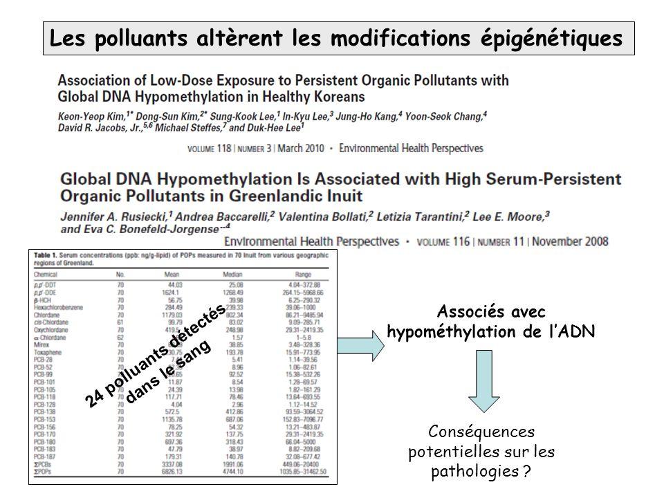 Associés avec hypométhylation de l'ADN Conséquences potentielles sur les pathologies ? Les polluants altèrent les modifications épigénétiques 24 pollu