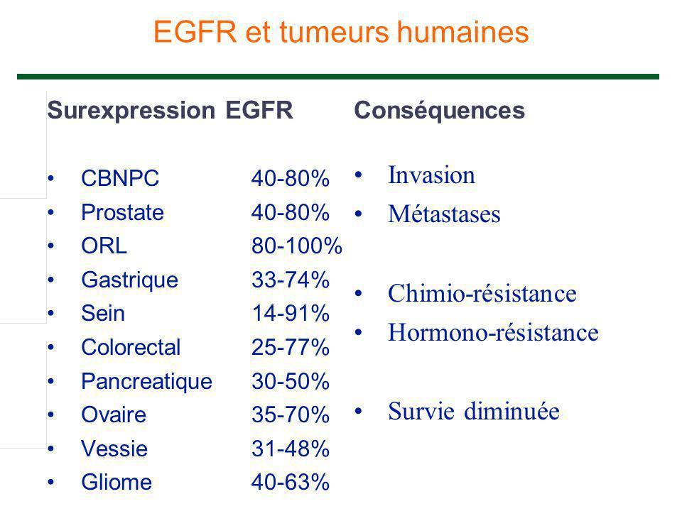 EGFR et tumeurs humaines CBNPC40-80% Prostate40-80% ORL80-100% Gastrique33-74% Sein14-91% Colorectal25-77% Pancreatique30-50% Ovaire35-70% Vessie31-48