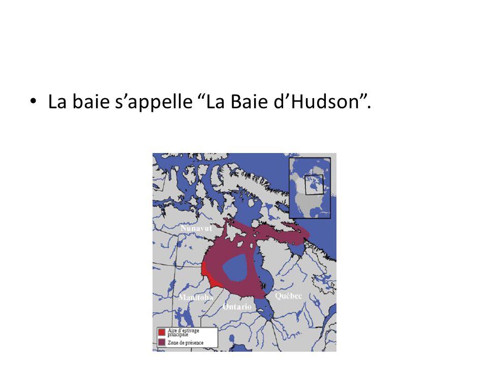 La baie s'appelle La Baie d'Hudson .