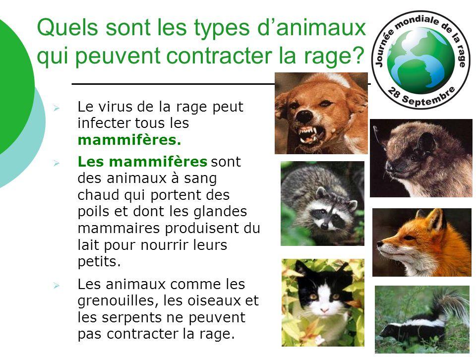  Le virus de la rage peut infecter tous les mammifères.  Les mammifères sont des animaux à sang chaud qui portent des poils et dont les glandes mamm