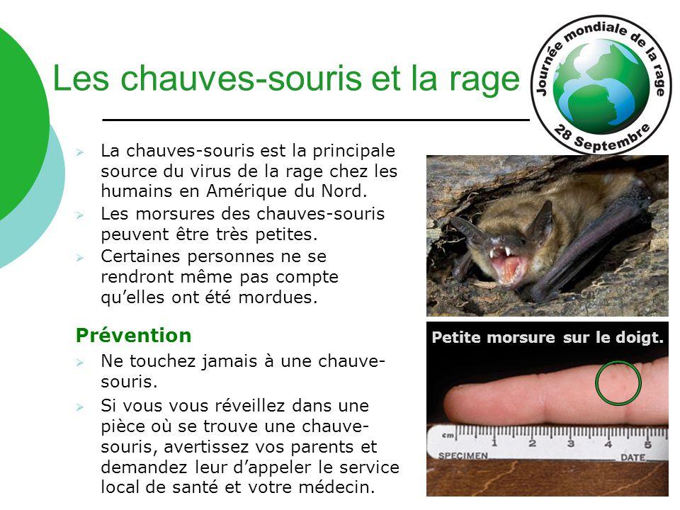 La chauves-souris est la principale source du virus de la rage chez les humains en Amérique du Nord.  Les morsures des chauves-souris peuvent être