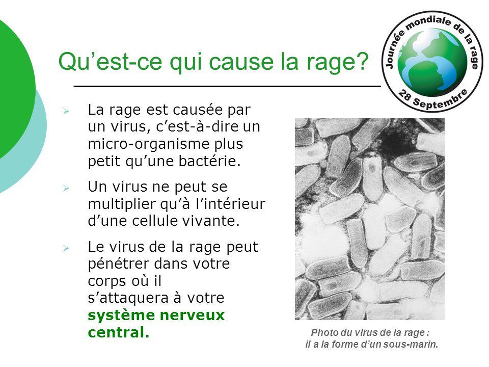 Photo du virus de la rage : il a la forme d'un sous-marin.  La rage est causée par un virus, c'est-à-dire un micro-organisme plus petit qu'une bactér