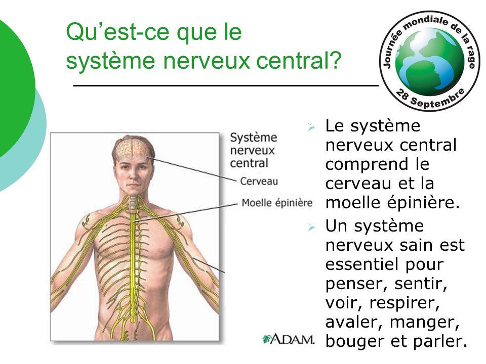  Le système nerveux central comprend le cerveau et la moelle épinière.  Un système nerveux sain est essentiel pour penser, sentir, voir, respirer, a