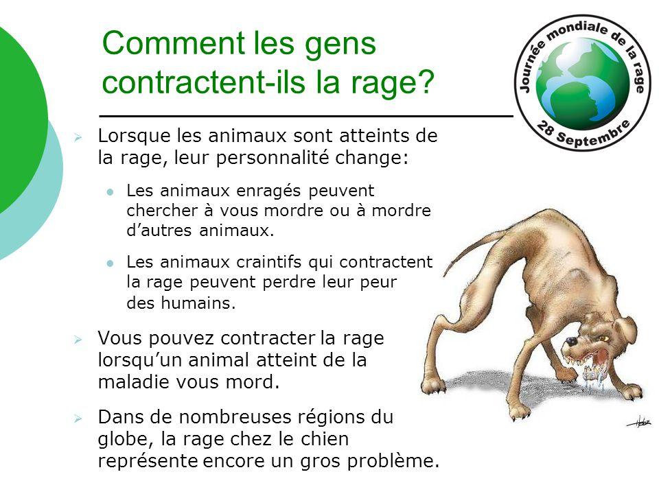 Comment les gens contractent-ils la rage?  Lorsque les animaux sont atteints de la rage, leur personnalité change: Les animaux enragés peuvent cherch