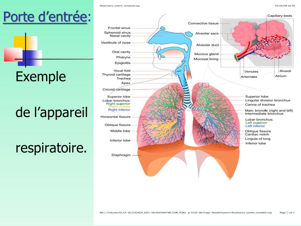 Porte d'entrée Porte d'entrée: Exemple de l'appareil respiratoire.