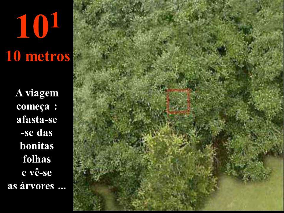 A viagem começa : afasta-se -se das bonitas folhas e vê-se as árvores... 10 1 10 metros