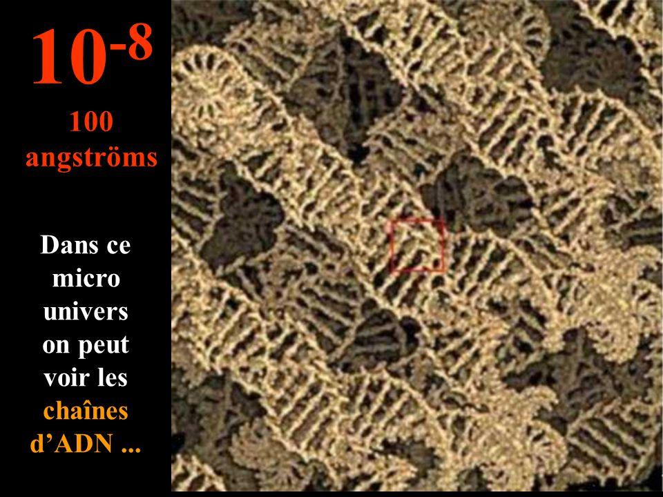 Plus petit que le micron … on voit les chromosomes 10 -7 1.000 angströms