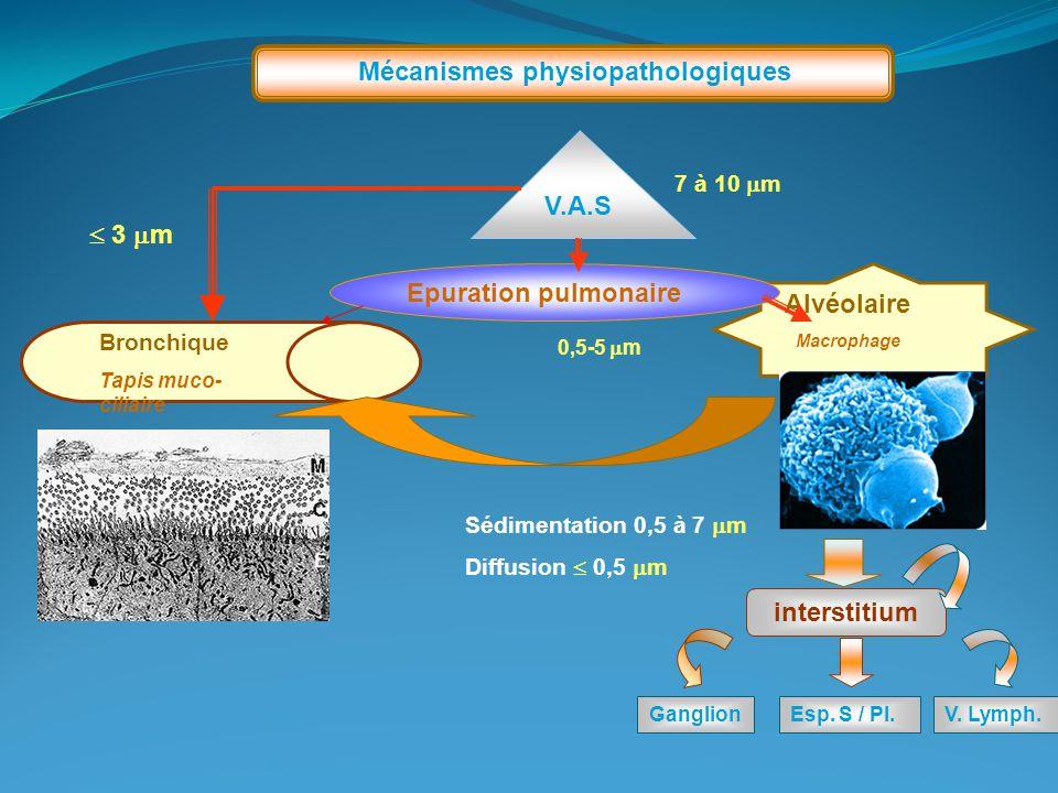 Alvéolaire Macrophage Mécanismes physiopathologiques Epuration pulmonaire V.A.S 7 à 10  m Bronchique Tapis muco- ciliaire 0,5-5  m interstitium Gang