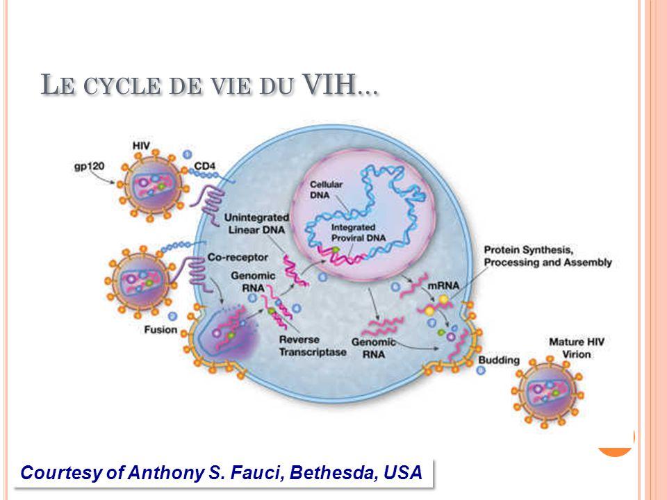 L E CYCLE DE VIE DU VIH... Courtesy of Anthony S. Fauci, Bethesda, USA