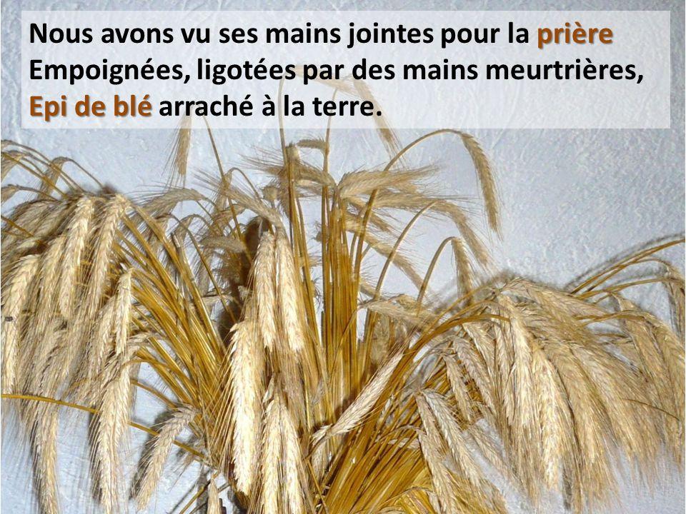 prière Nous avons vu ses mains jointes pour la prière Empoignées, ligotées par des mains meurtrières, Epi de blé Epi de blé arraché à la terre.