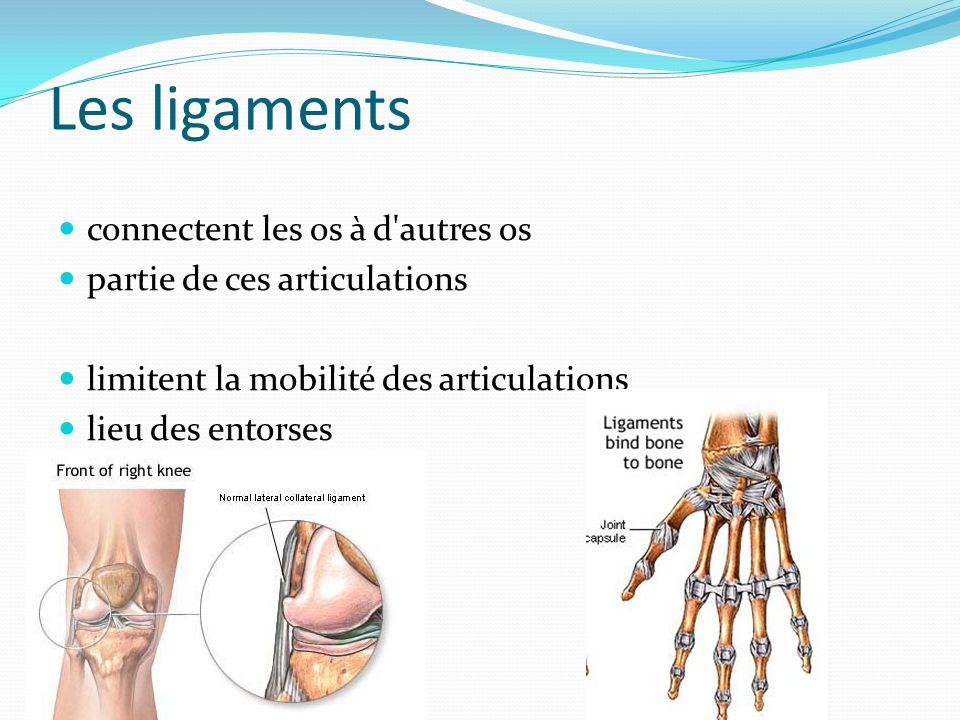 Les ligaments connectent les os à d'autres os partie de ces articulations limitent la mobilité des articulations lieu des entorses
