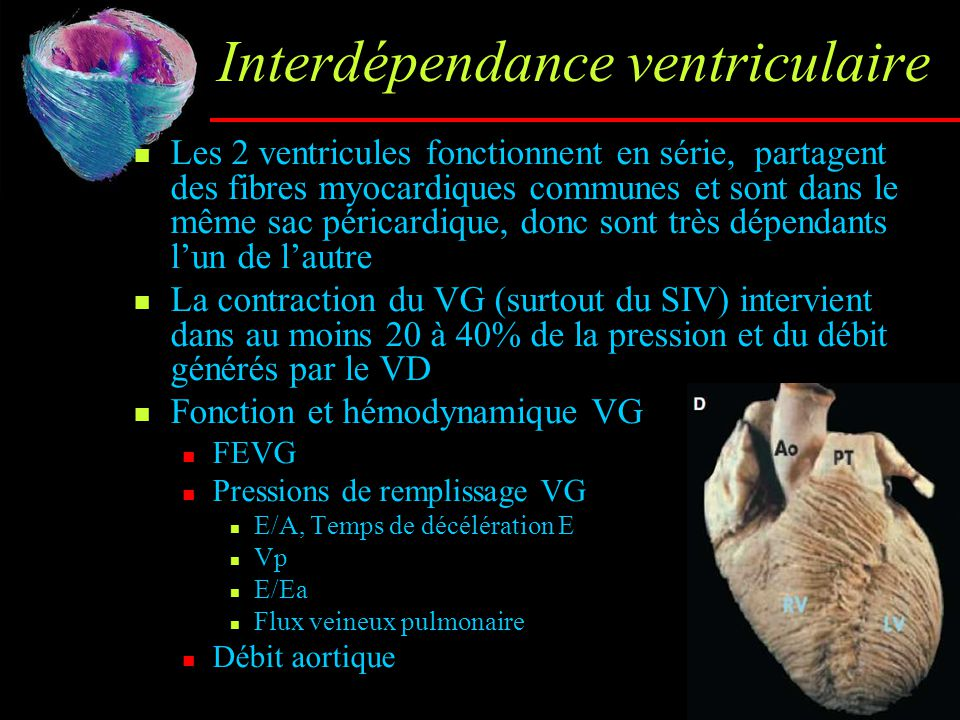 Interdépendance ventriculaire Les 2 ventricules fonctionnent en série, partagent des fibres myocardiques communes et sont dans le même sac péricardiqu