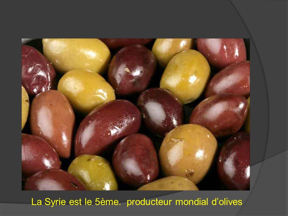 La Syrie est le 5ème. producteur mondial d'olives
