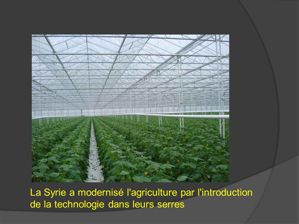 La Syrie a modernisé l'agriculture par l'introduction de la technologie dans leurs serres
