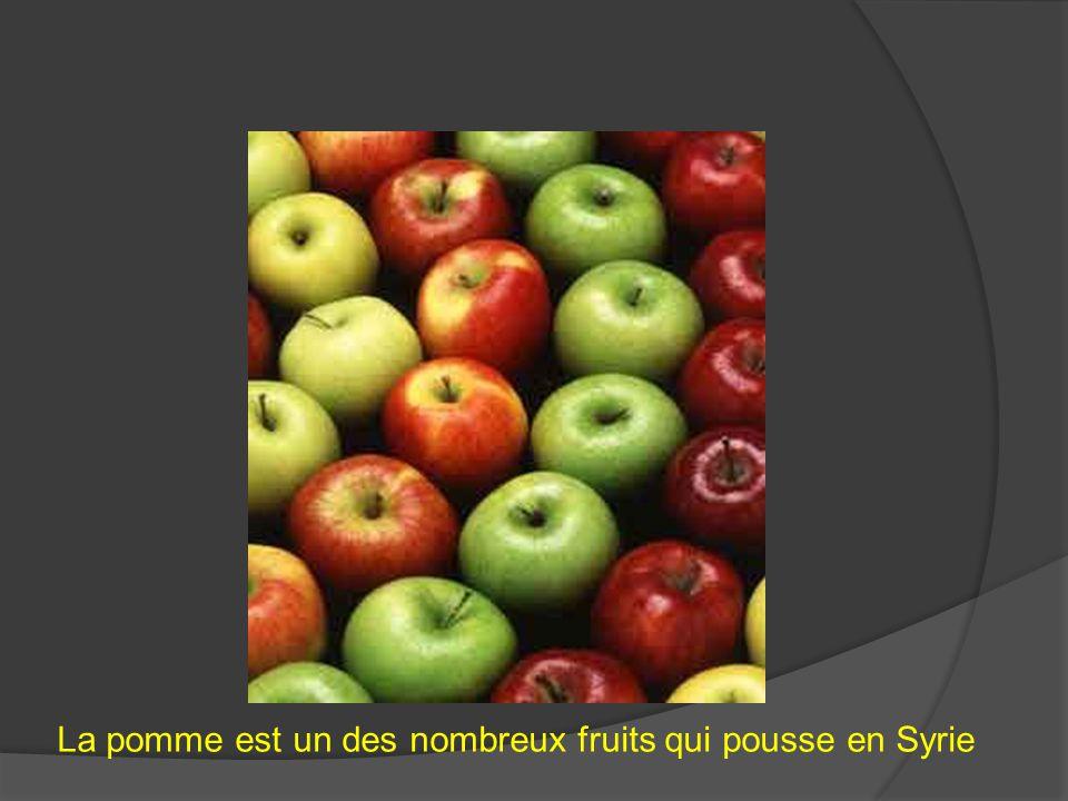 La pomme est un des nombreux fruits qui pousse en Syrie
