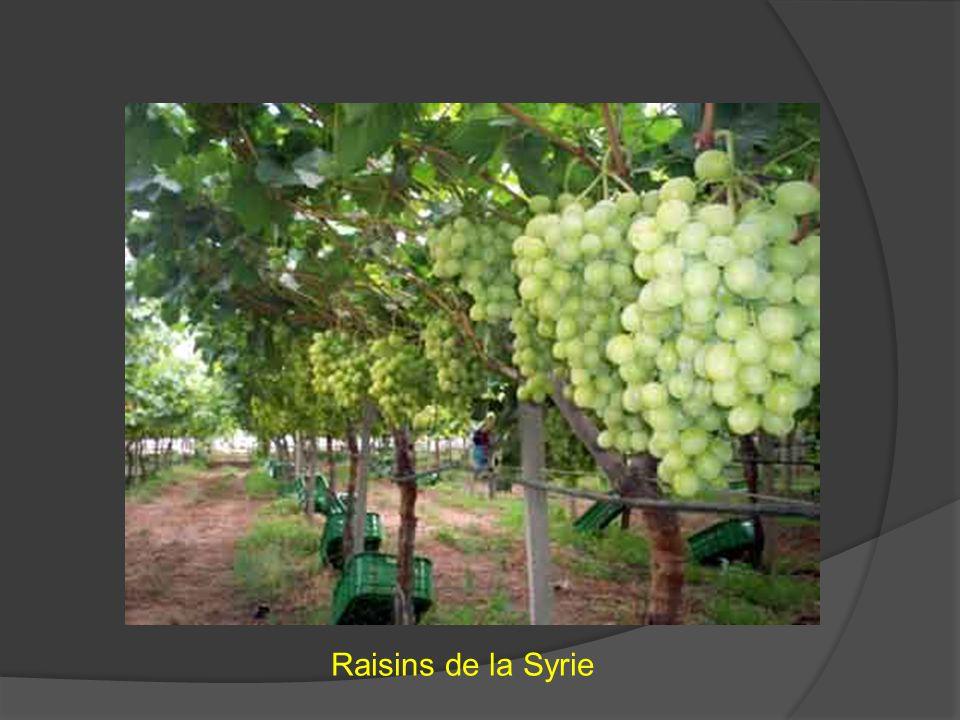 Raisins de la Syrie