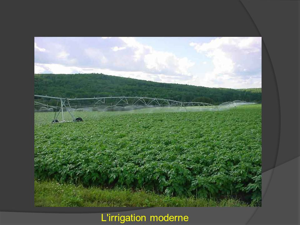 L irrigation moderne