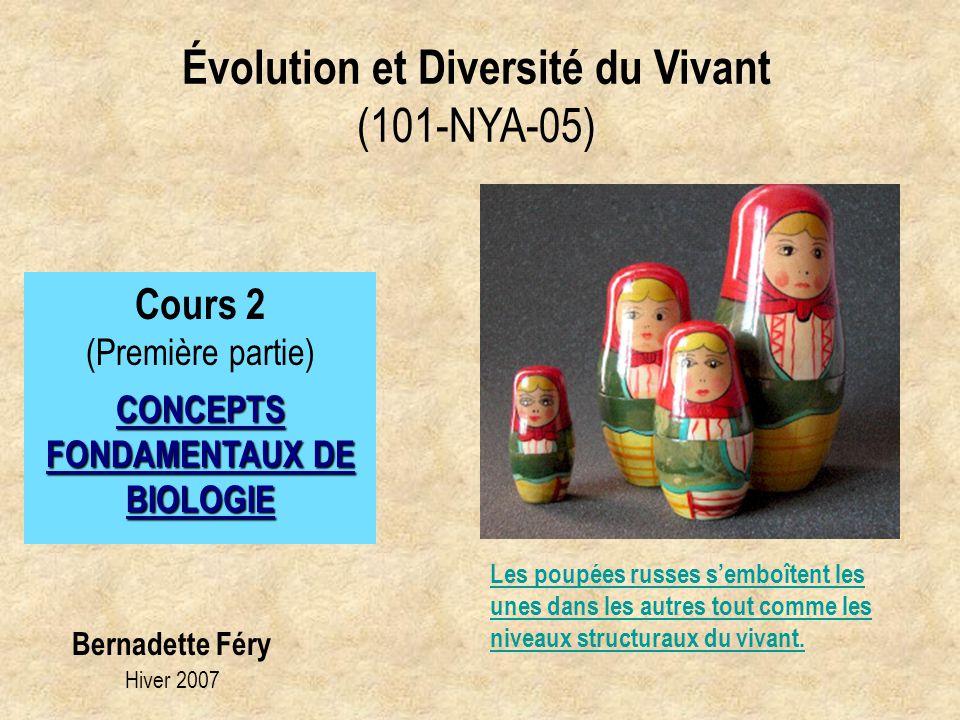 Évolution et Diversité du Vivant (101-NYA-05) Cours 2 (Première partie) CONCEPTS FONDAMENTAUX DE BIOLOGIE Bernadette Féry Hiver 2007 Les poupées russe