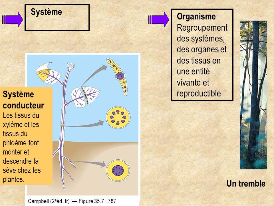 Système conducteur Les tissus du xylème et les tissus du phloème font monter et descendre la sève chez les plantes. Système Campbell (2 e éd. fr) — Fi