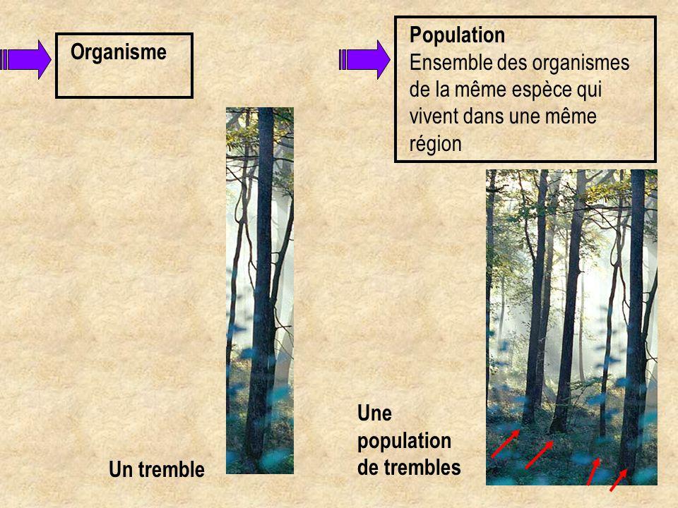 Organisme Un tremble Population Ensemble des organismes de la même espèce qui vivent dans une même région Une population de trembles
