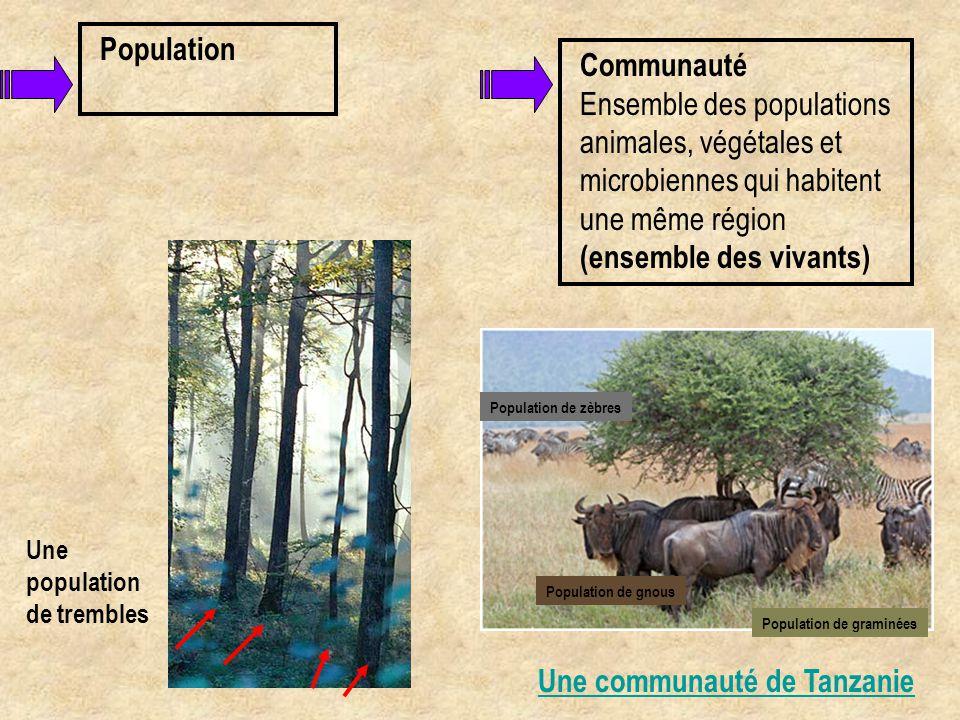 Communauté Ensemble des populations animales, végétales et microbiennes qui habitent une même région (ensemble des vivants) Une communauté de Tanzanie