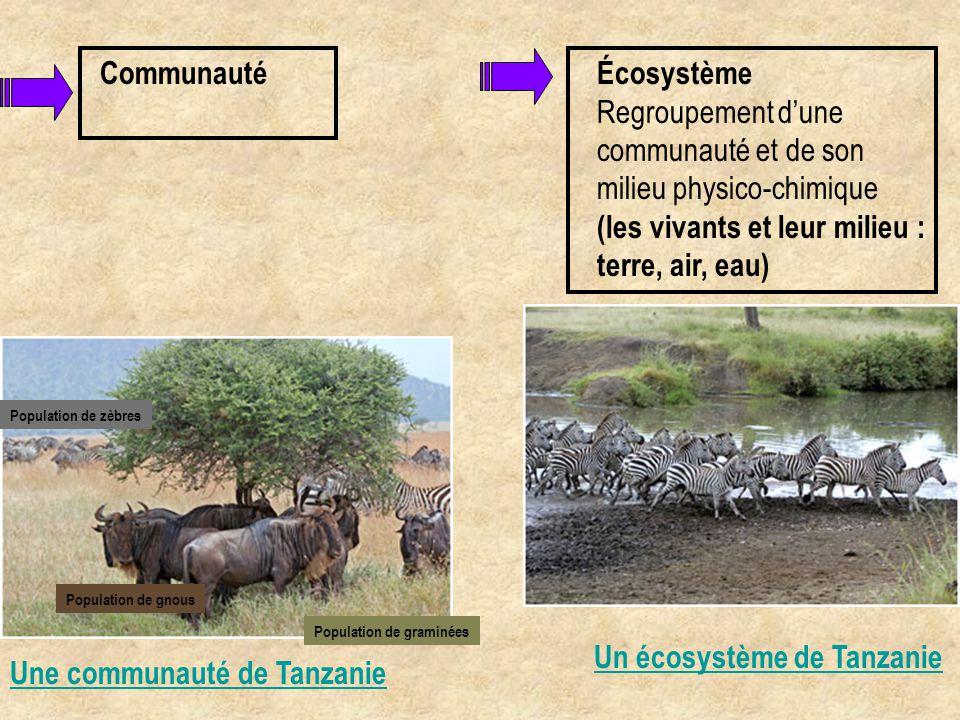 Communauté Une communauté de Tanzanie Population de zèbres Population de graminées Population de gnous Un écosystème de Tanzanie Écosystème Regroupeme