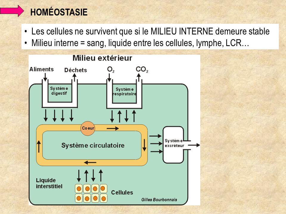 Les cellules ne survivent que si le MILIEU INTERNE demeure stable Milieu interne = sang, liquide entre les cellules, lymphe, LCR… HOMÉOSTASIE Gilles B