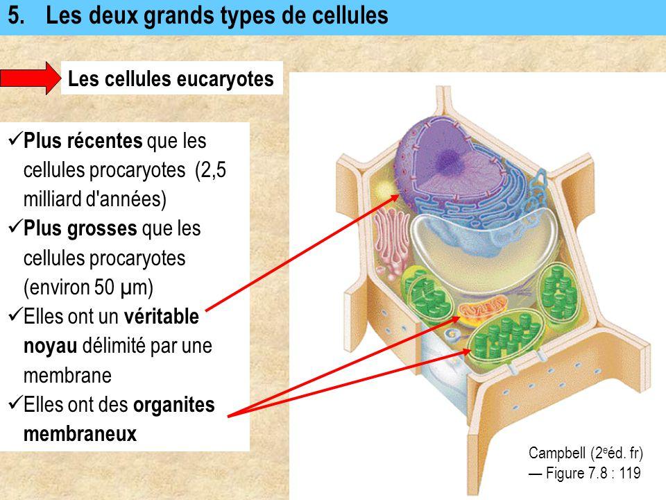 5. Les deux grands types de cellules Les cellules eucaryotes Plus récentes que les cellules procaryotes (2,5 milliard d'années) Plus grosses que les c