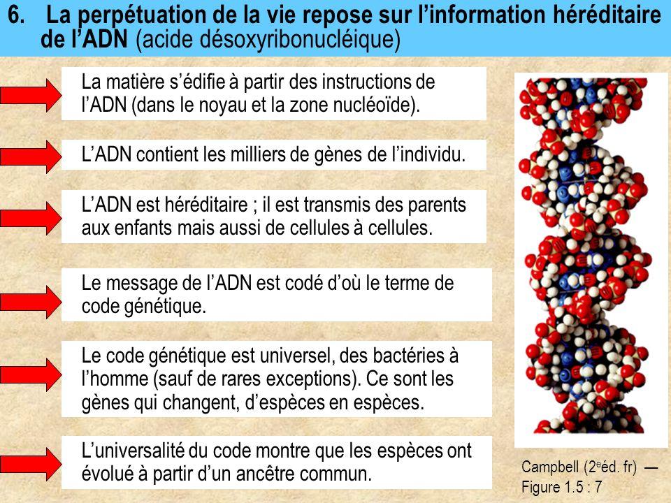 6. La perpétuation de la vie repose sur l'information héréditaire de l'ADN (acide désoxyribonucléique) La matière s'édifie à partir des instructions d