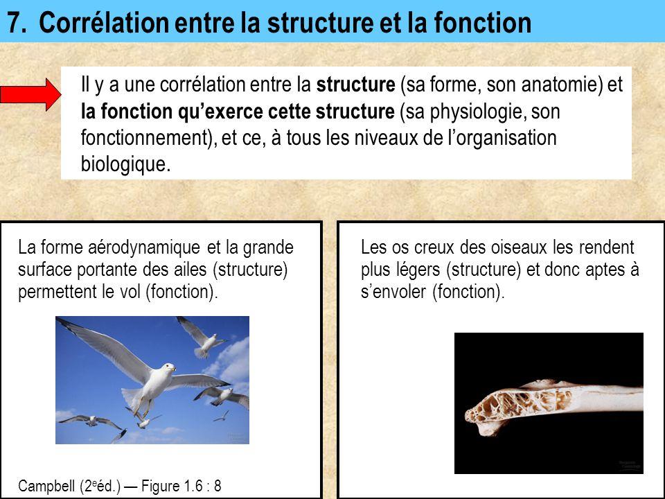 7. Corrélation entre la structure et la fonction Il y a une corrélation entre la structure (sa forme, son anatomie) et la fonction qu'exerce cette str
