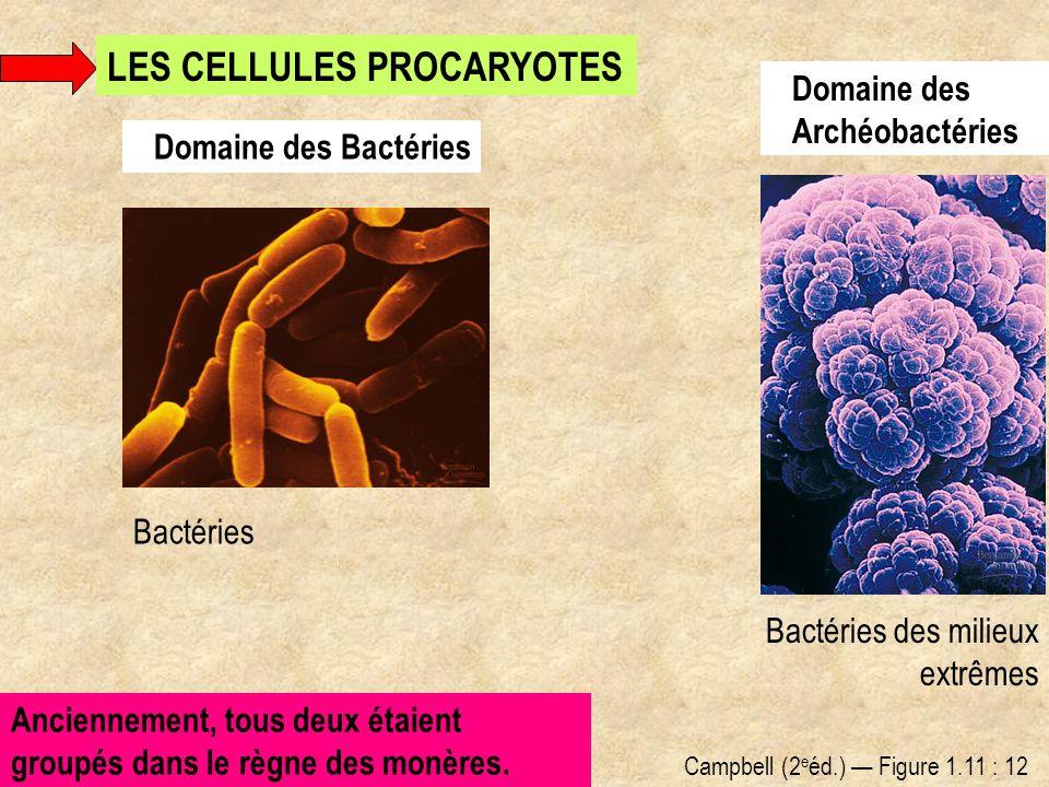 Domaine des Bactéries Domaine des Archéobactéries Bactéries des milieux extrêmes Bactéries Anciennement, tous deux étaient groupés dans le règne des m