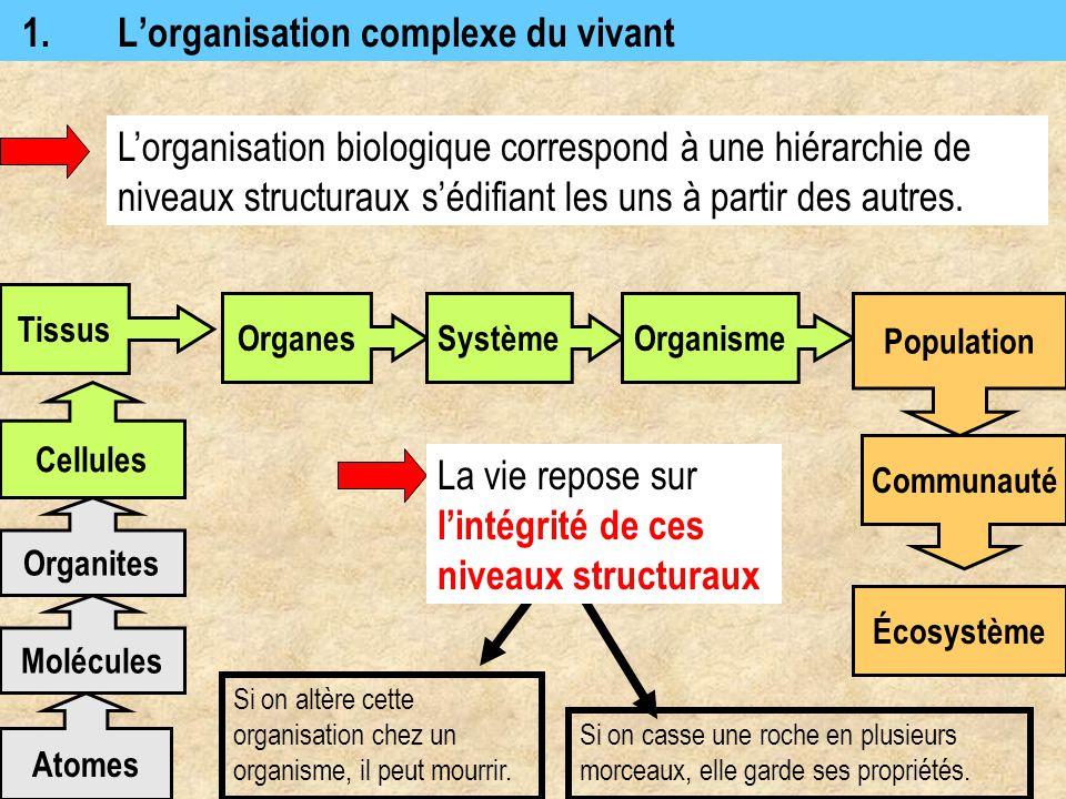 1.L'organisation complexe du vivant L'organisation biologique correspond à une hiérarchie de niveaux structuraux s'édifiant les uns à partir des autre