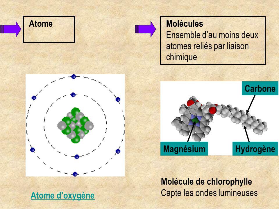 Atome d'oxygène Atome Molécules Ensemble d'au moins deux atomes reliés par liaison chimique Molécule de chlorophylle Capte les ondes lumineuses Hydrog