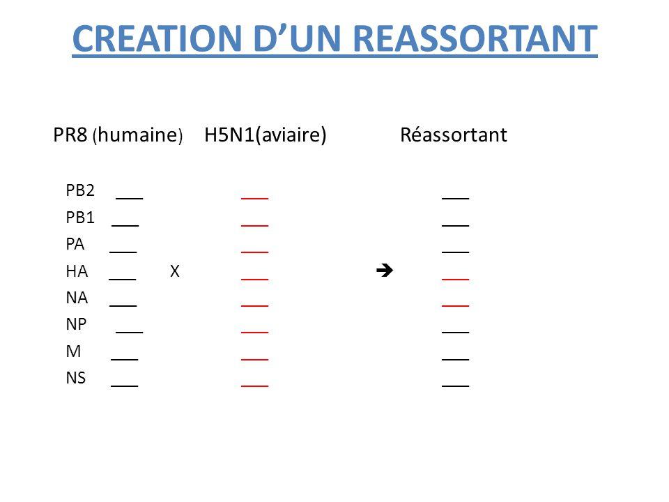 CREATION D'UN REASSORTANT PR8 ( humaine ) H5N1(aviaire) Réassortant PB2 _________ PB1 _________ PA _________ HA ___ X___  ___ NA _________ NP _______