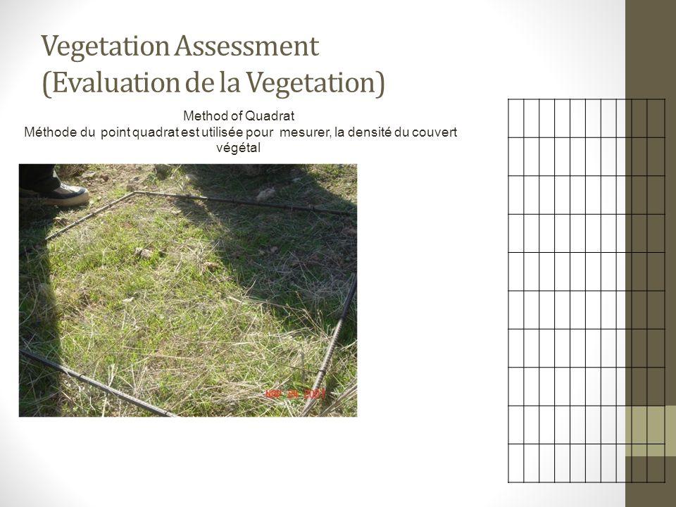 Vegetation Assessment (Evaluation de la Vegetation) Method of Quadrat Méthode du point quadrat est utilisée pour mesurer, la densité du couvert végéta