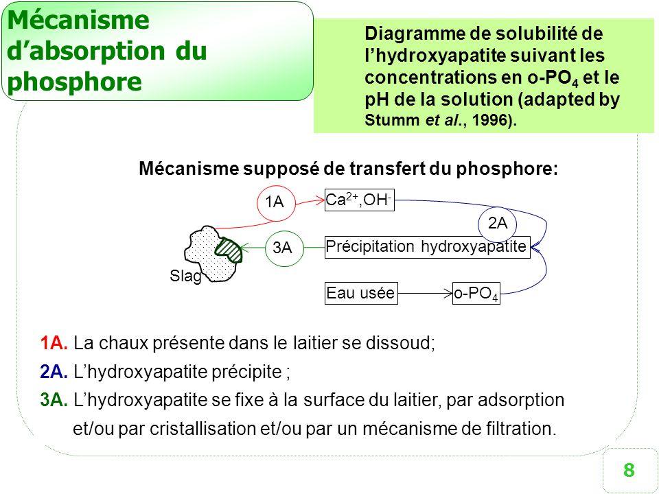 8 Mécanisme d'absorption du phosphore 1A. La chaux présente dans le laitier se dissoud; 2A. L'hydroxyapatite précipite ; 3A. L'hydroxyapatite se fixe