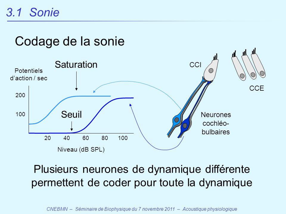 CNEBMN – Séminaire de Biophysique du 7 novembre 2011 – Acoustique physiologique CCE CCI Neurones cochléo- bulbaires Potentiels d'action / sec Niveau (dB SPL) 20406080100 200 Seuil Saturation Plusieurs neurones de dynamique différente permettent de coder pour toute la dynamique 3.1 Sonie Codage de la sonie