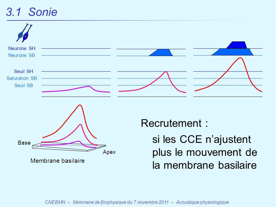 CNEBMN – Séminaire de Biophysique du 7 novembre 2011 – Acoustique physiologique Base Apex Membrane basilaire Seuil SB Seuil SH Saturation SB Neurone SB Neurone SH Recrutement : si les CCE n'ajustent plus le mouvement de la membrane basilaire 3.1 Sonie