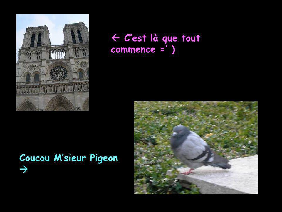  C'est là que tout commence =' ) Coucou M'sieur Pigeon 