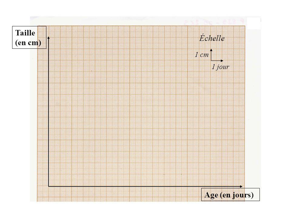 POINTS CLES Le graphique est réalisé sur un papier millimétré; On ne doit utiliser que le crayon de papier ( bien traité) pour tout le travail; Le travail doit être propre et précis.