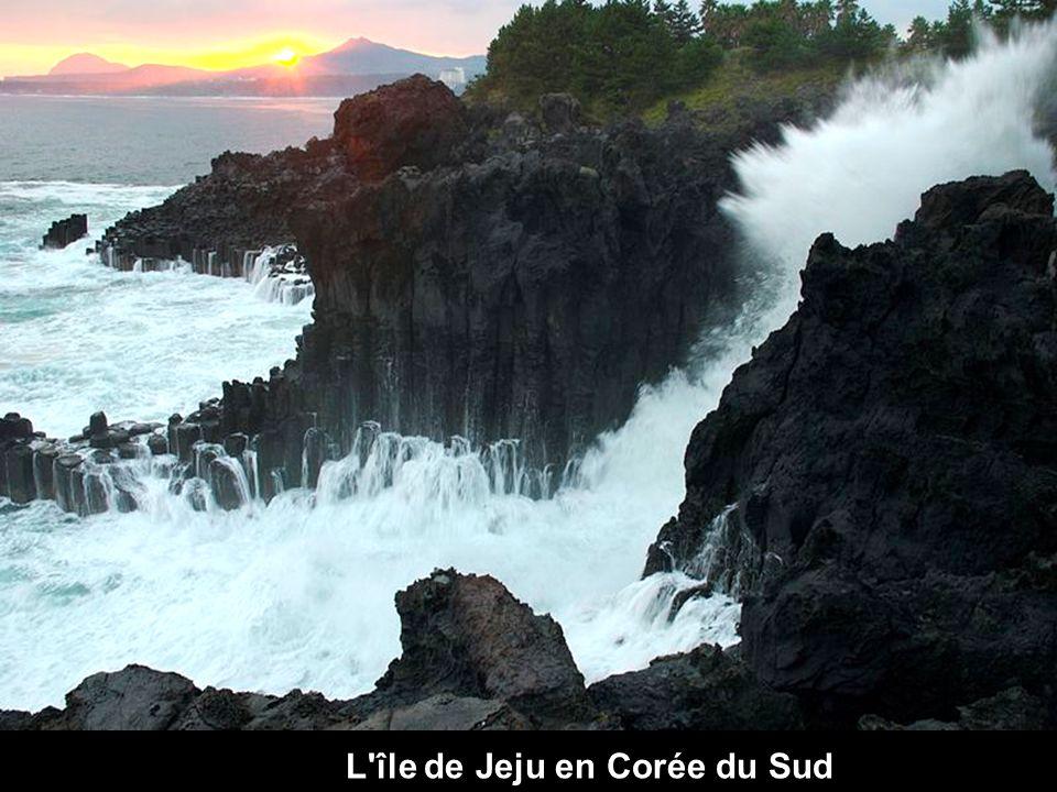 L île de Jeju en Corée du Sud